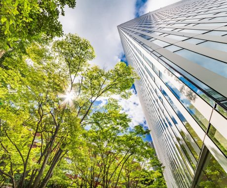 Upward view of tree and office building on sunny day